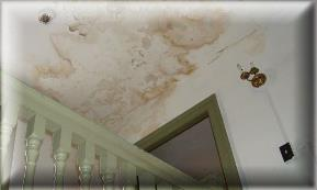 Water Stains Mold Ceiling Walls Mould Testing Remove Remediate